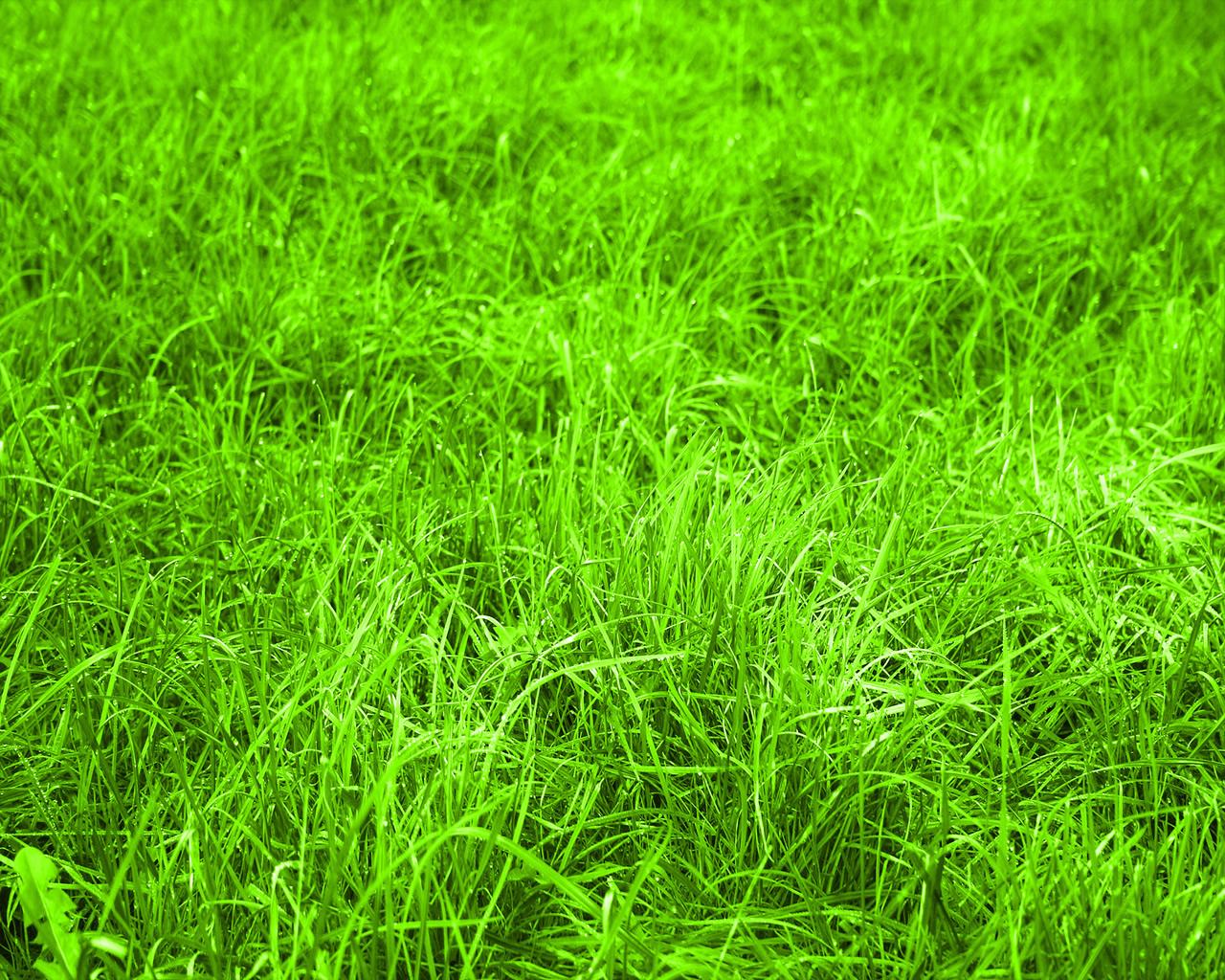 http://3.bp.blogspot.com/-mGZieQQlxFY/ThsWK5XEJjI/AAAAAAAAH5A/KqUrGDdOdFQ/s1600/nature+grass+wallpaper.jpg
