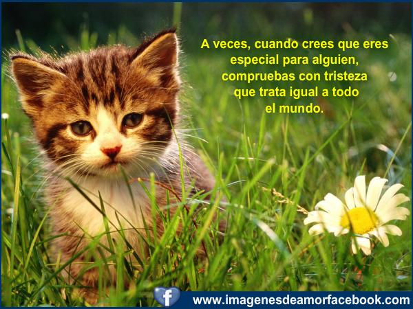 Postales De Tristeza Para Facebook  Imagenes Con Frases