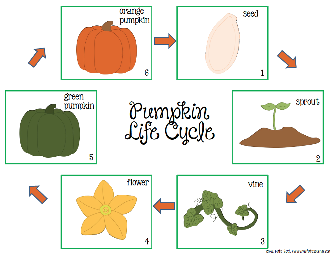 worksheet Life Cycle Of A Pumpkin Worksheet life cycle of a pumpkin lessons tes teach