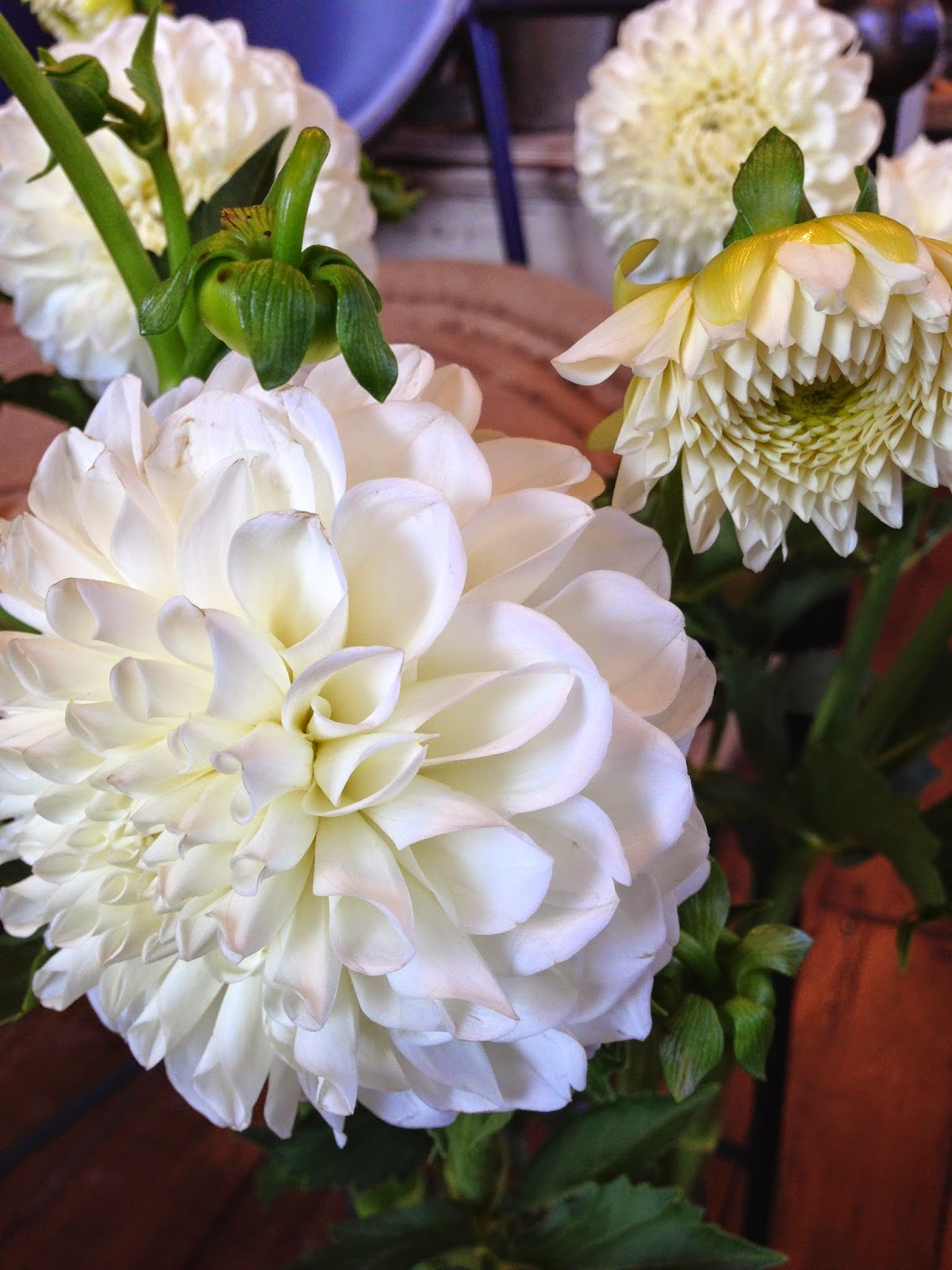 flower of the week : les fleurs : andover florist : dahlia : white