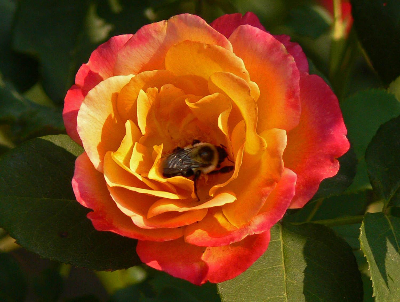 KY Natural Inquirer Flirtatious Flowers