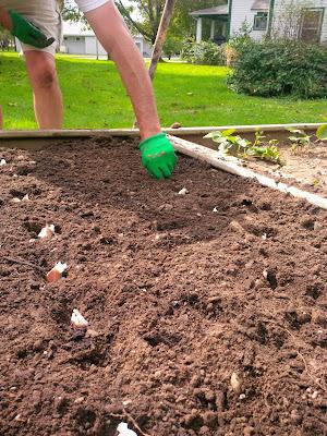Nova Scotia Gardening Garlic planting