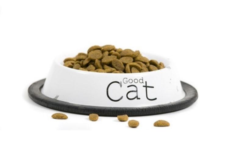Makanan Kucing Persia Yang Baik,anggora,contoh makanan kucing persia,makanan untuk persia
