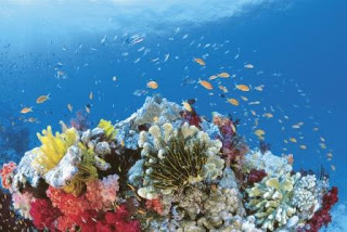 Dive Worldwide. ReefLive, Great Barrier Reef Australia