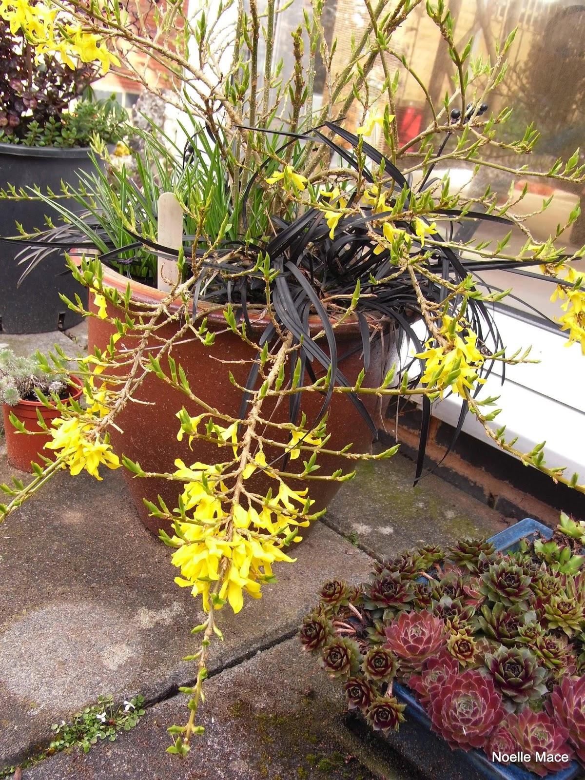 Stasher: Garden at the start of April