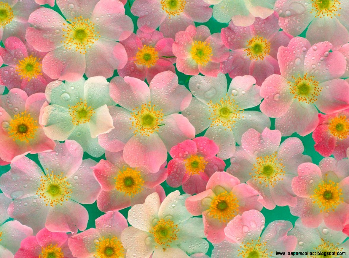 Download High Quality Flowers Wallpaper