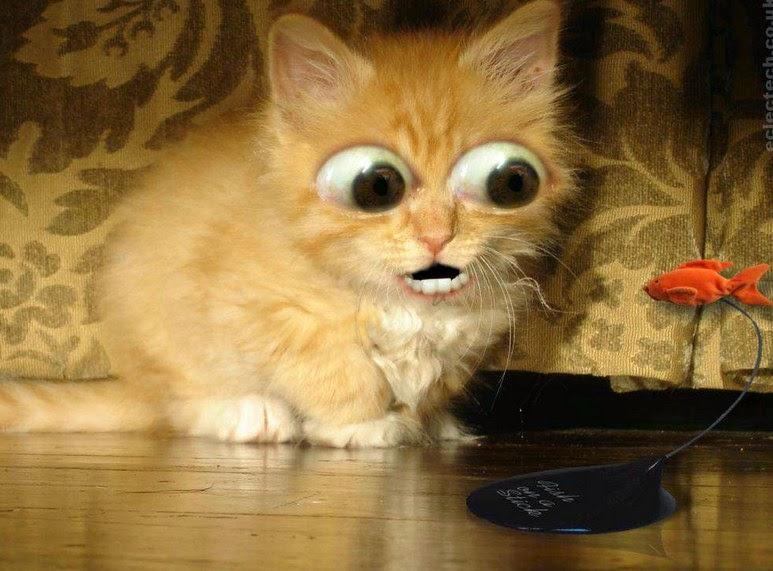 Gambar Kucing Lucu dan aneh