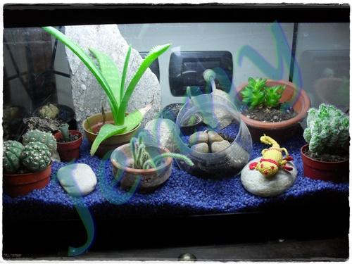 Fabbricante di bambole acquario o terrario for Acquario per tartarughe piccole