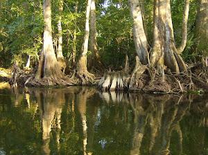Florida Canoeing and Kayaking