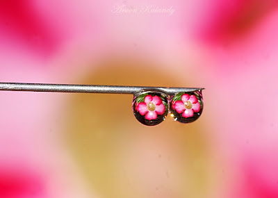 water drops photography
