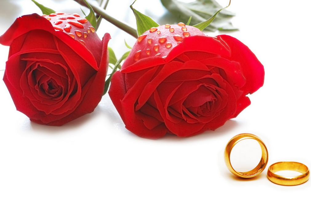 happy rose day 2014 images with golden rings
