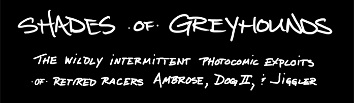 shades of greyhounds
