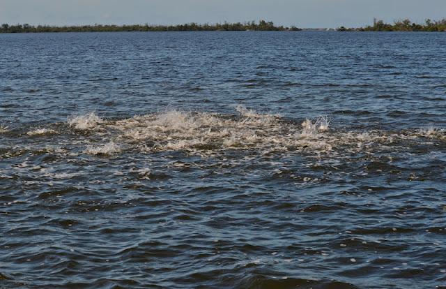The pine island angler matlacha fishing report big for Pine island fishing charters
