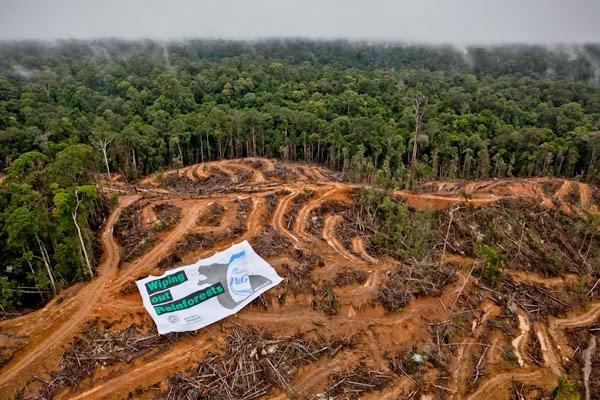 Laju Kerusakan Hutan di Indonesia Lampaui Brasil