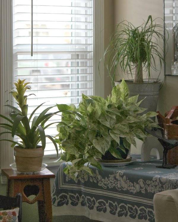 House Plant Love Cozy Little House