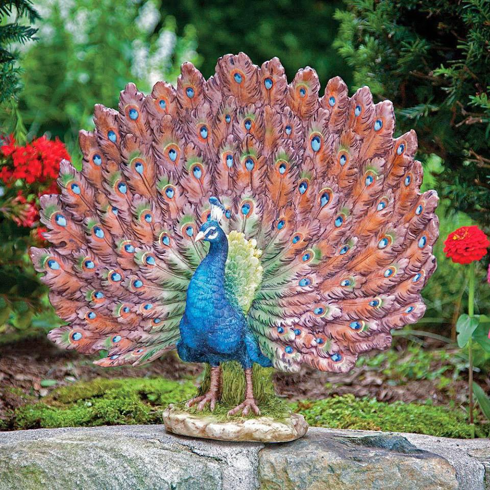 nice peacock image