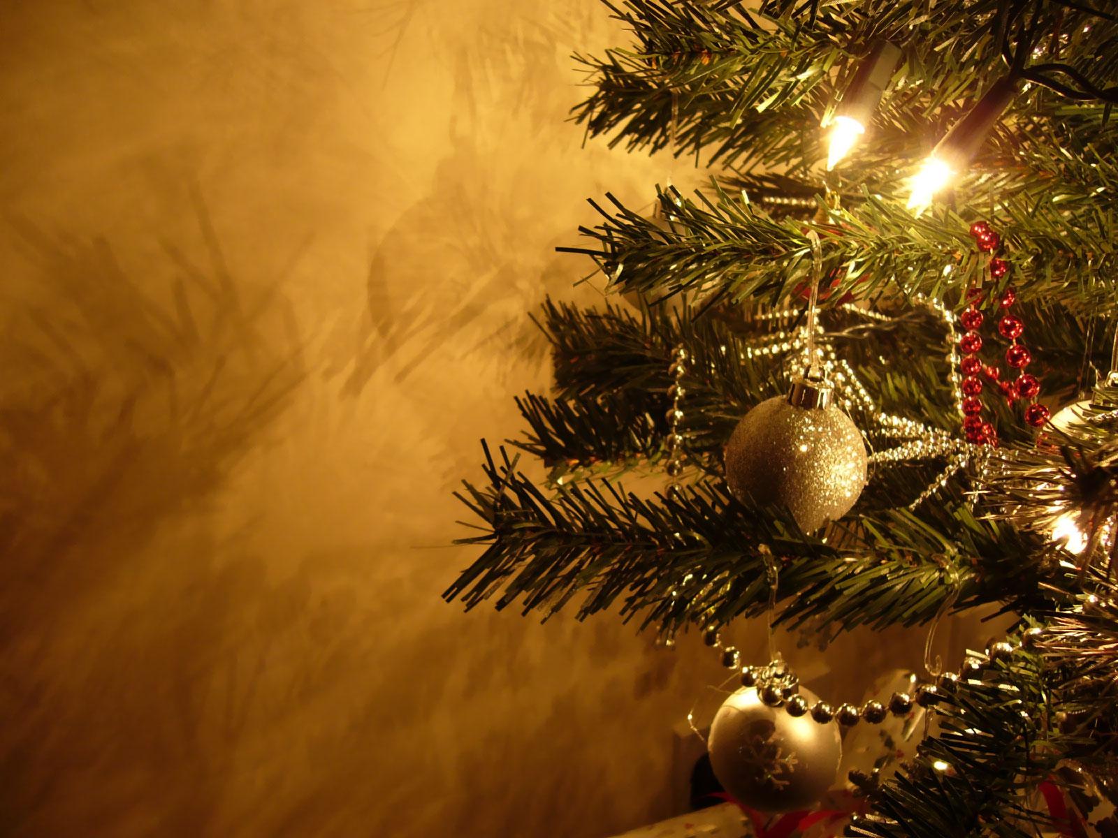 imagenes de animales de navidad - 17 imágenes del lado más excéntrico de los animales en