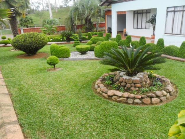 plantas e jardins ornamentais:Plantas Ornamentais – Verde em Folha