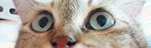=*_*=chakk..!! skodeng gak!=*_*=
