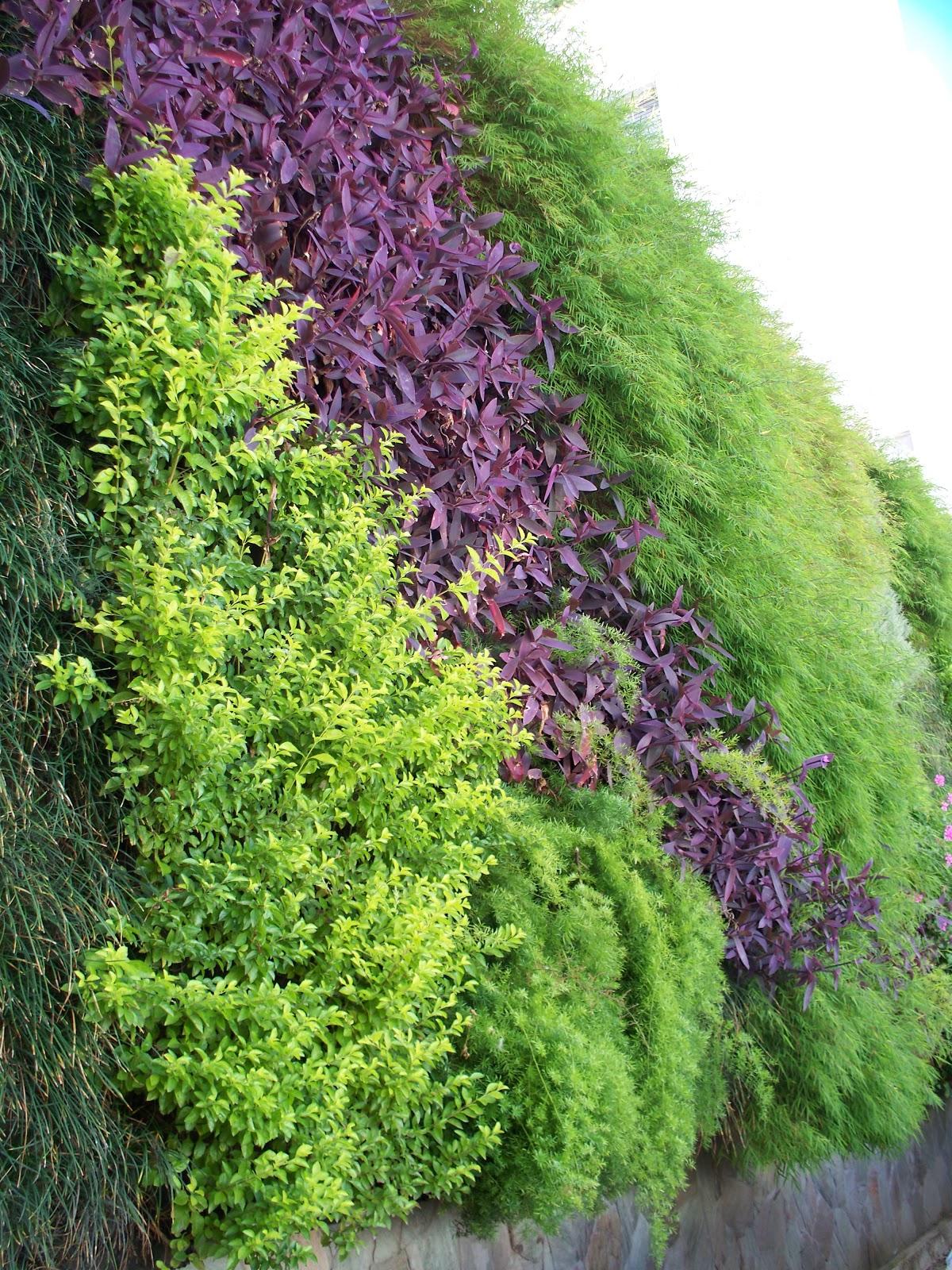 Jardines verticales monterrey fotos de la plata en oto o for Imagenes de jardines verticales