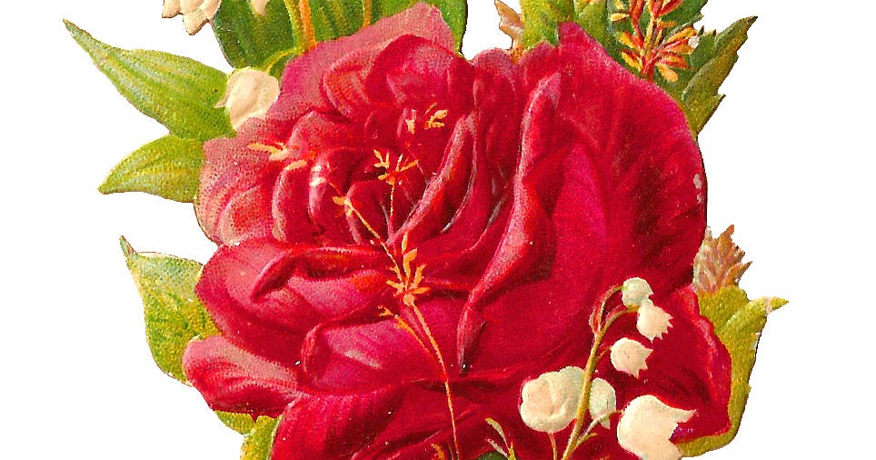 Antique Images: Free Flower Graphic: Digital Scrap of Red Rose and Lily of th...
