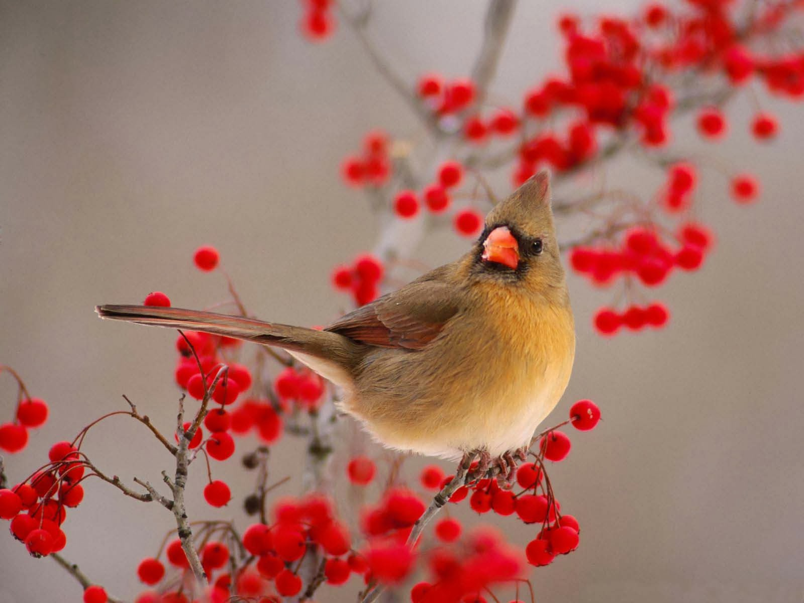 Wallpaper Hd Beautiful Nice And Lovely Birds Images If you're in search of the best full hd flowers wallpapers, you've come to the right place. wallpaper hd