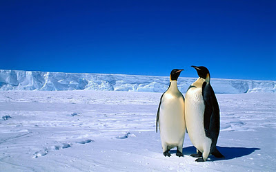 ... Penguin wallpapers and Penguin backgrounds for your computer desktop Penguin Moving Animation