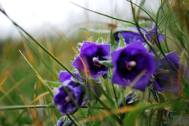 Random flower close-up