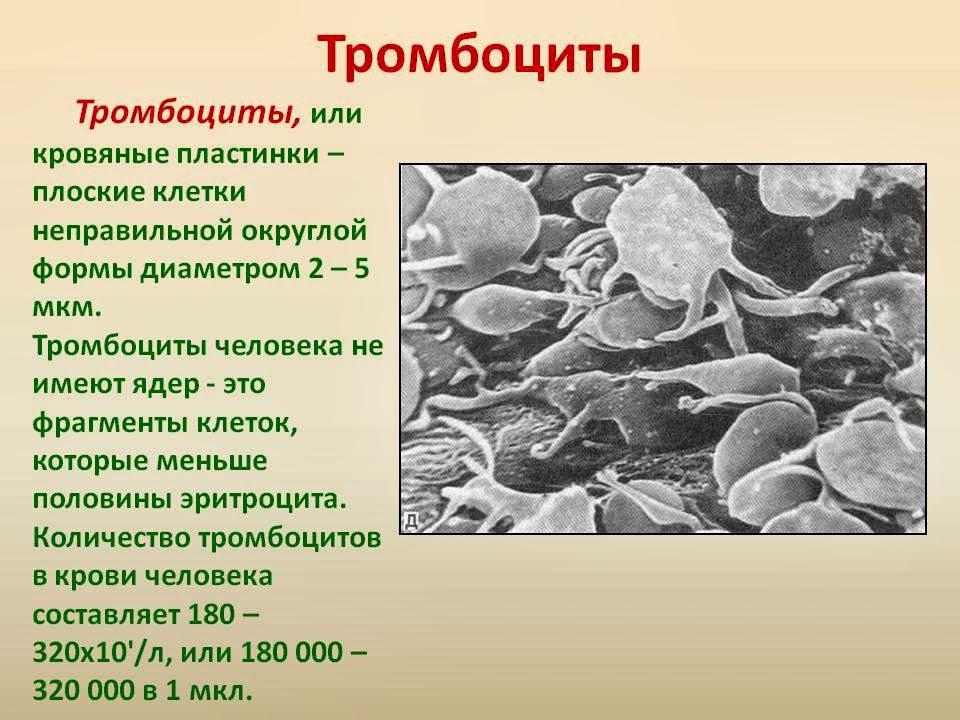 Тромбоцитоз фото