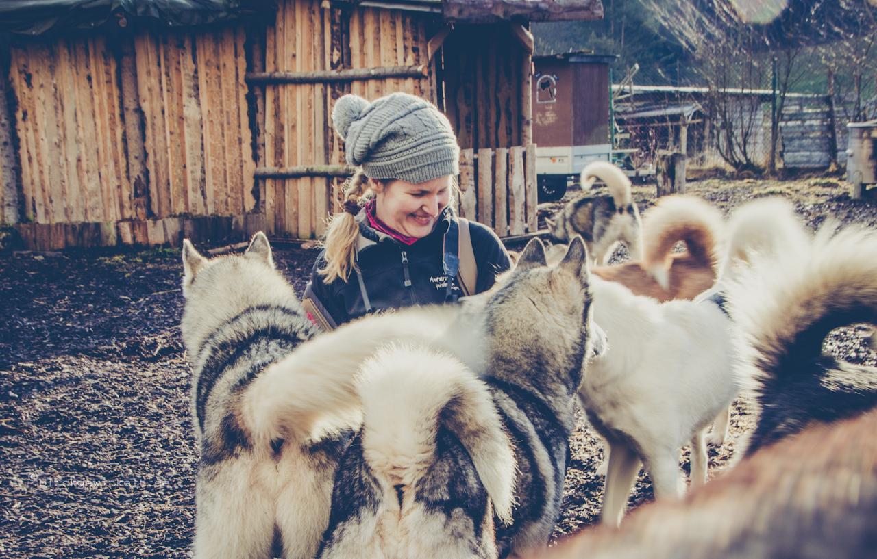 Inka zwischen zig Huskies