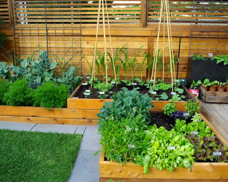 Small Vegetable Garden Design Ideas