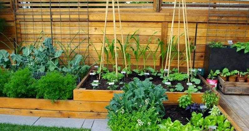 Small vegetable garden design ideas for Home vegetable garden ideas
