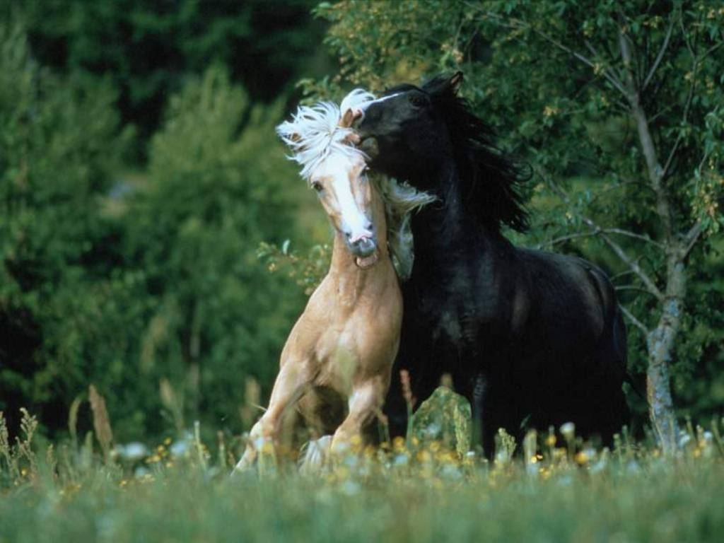 Great   Wallpaper Horse Rose - wild+horses+wallpapers+23  Trends_701330.jpg