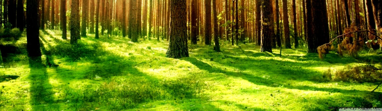 hd forest wallpaper widescreen full free download