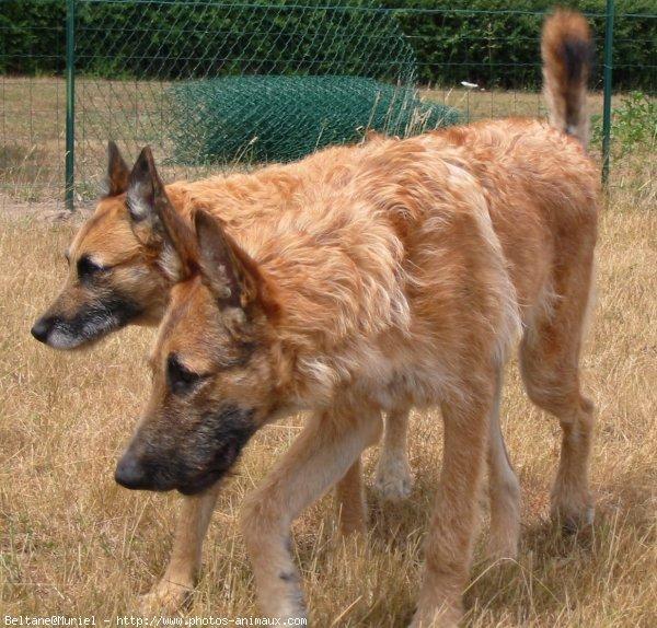 rencontre entre deux chien