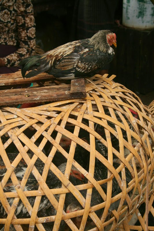 Birds for sale in Yangon's wet markets