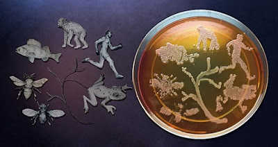 Microbes can influence evolution of their hosts