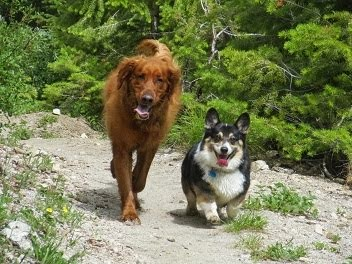 My Canine Buddies