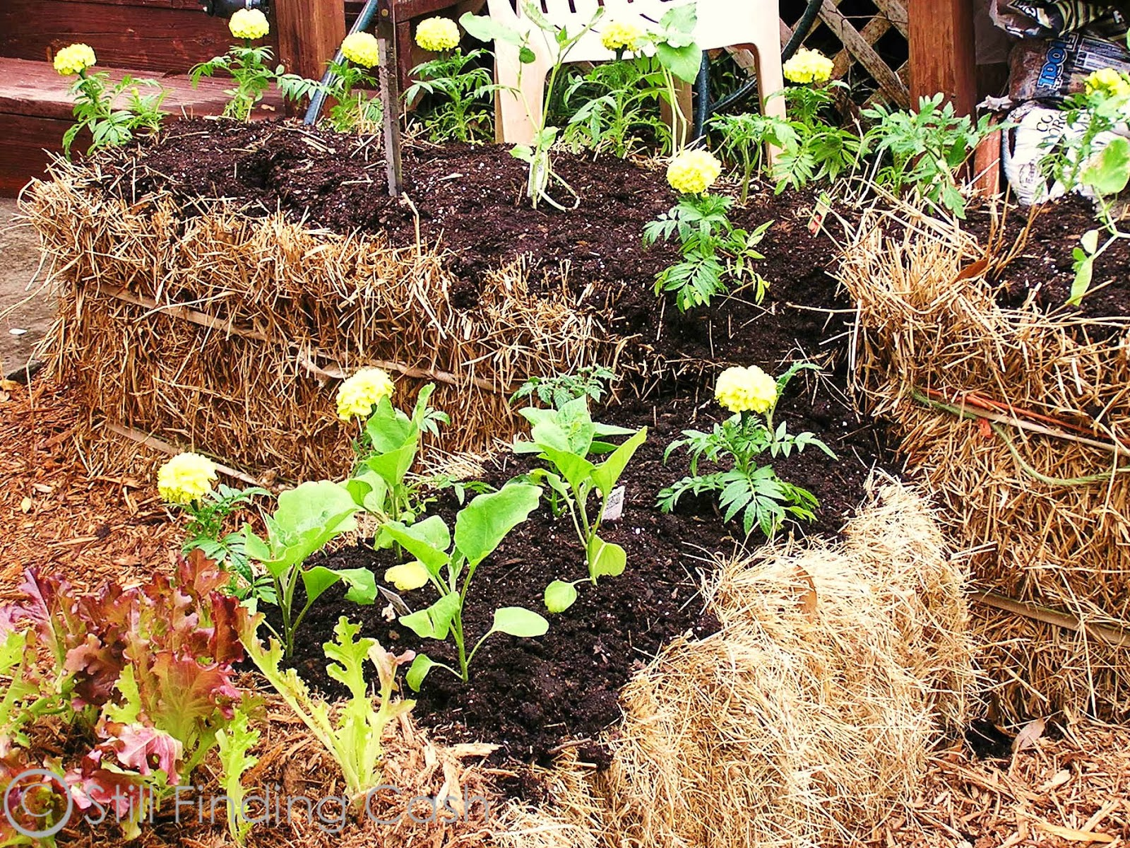 growing plants in hay bales Click HERE to link to Hay Bale post #1, and HERE for post #2)