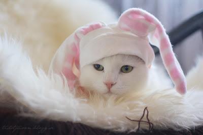 Gatos con orejas de conejo para Pascua