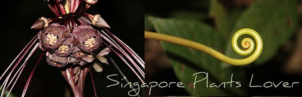 Singapore Plants Lover