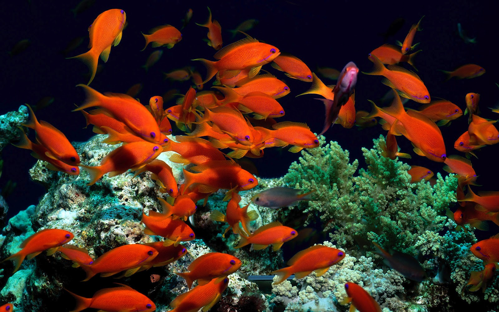 Fish Pictures Ocean Wallpapers Chapter 1 - HD Animal Wallpapers