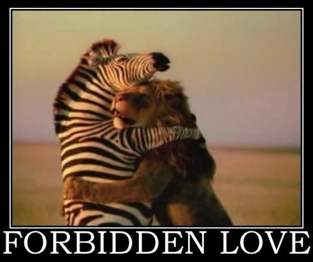 animal valentines day memes - RedHotPogo Random Valentine s Memes