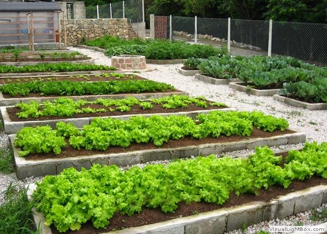 na horta no jardim no quintal ? Doitri.com