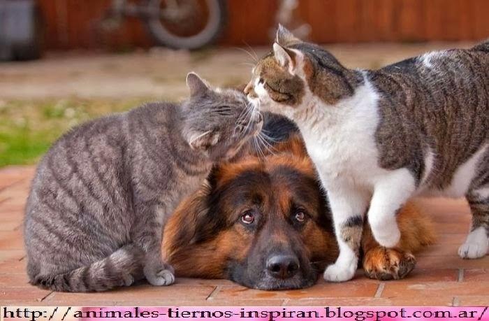 imagenes divertidas de animales - Fotos graciosas y divertidas on Pinterest 763 Pins
