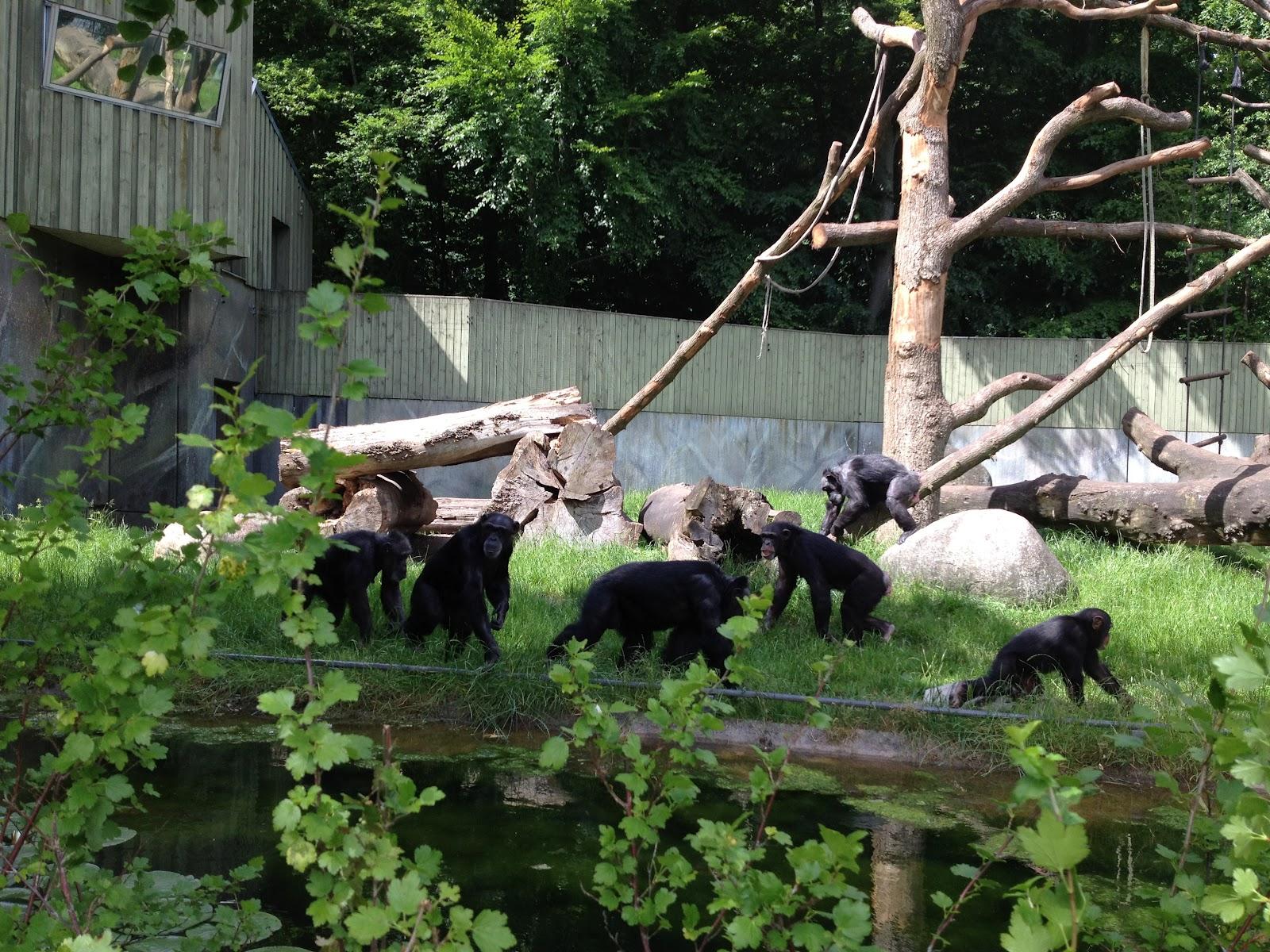 zoo Aarhus bio i Aalborg
