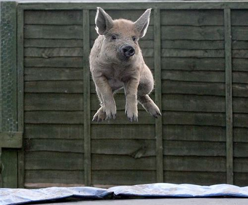 Amazing Animals Jump  Nice Pics hot photos