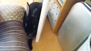 隙間で寝るうさぎ、ミニレッキス