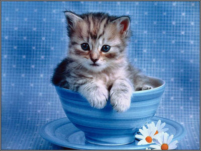 Cute Cats Wallpapers