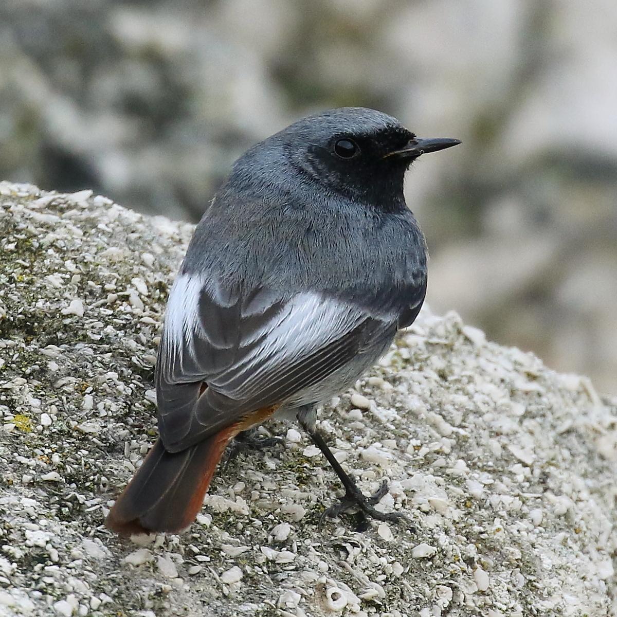Peter Moore's Wildlife Blog: Best looking bird in Dorset?